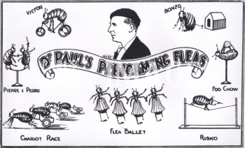 media-image-096-dr-pauls-flea-circus-at-weston-super-mare